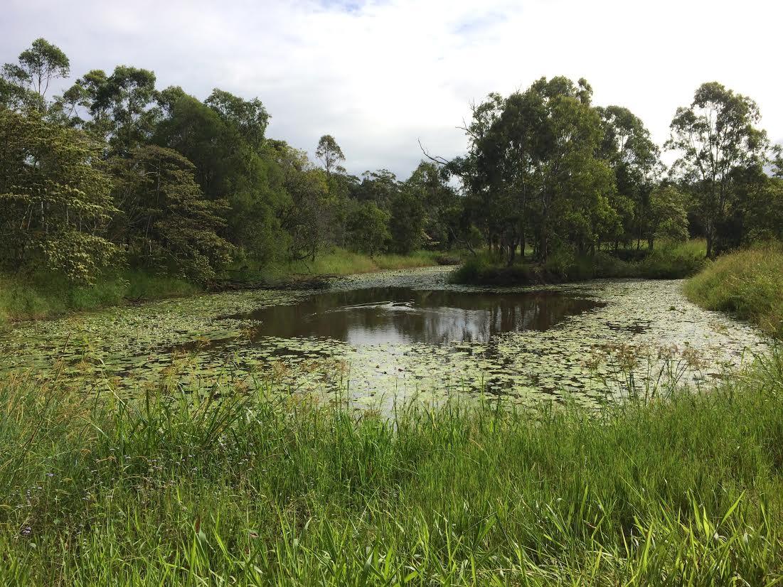150311 Noosa Nature Reserve