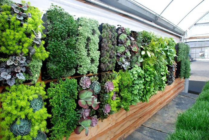 Courtyard design tips news ray white golden grove for Vertical garden design