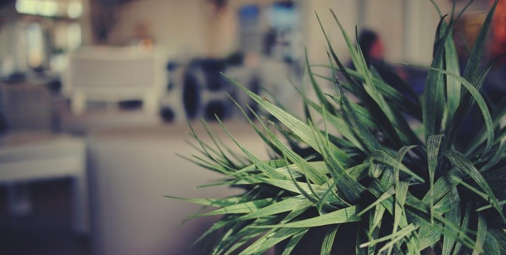 Choosing an indoor plant for your living room