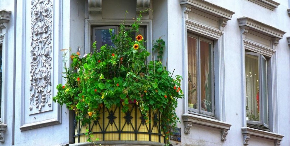 Your guide to building a balcony garden