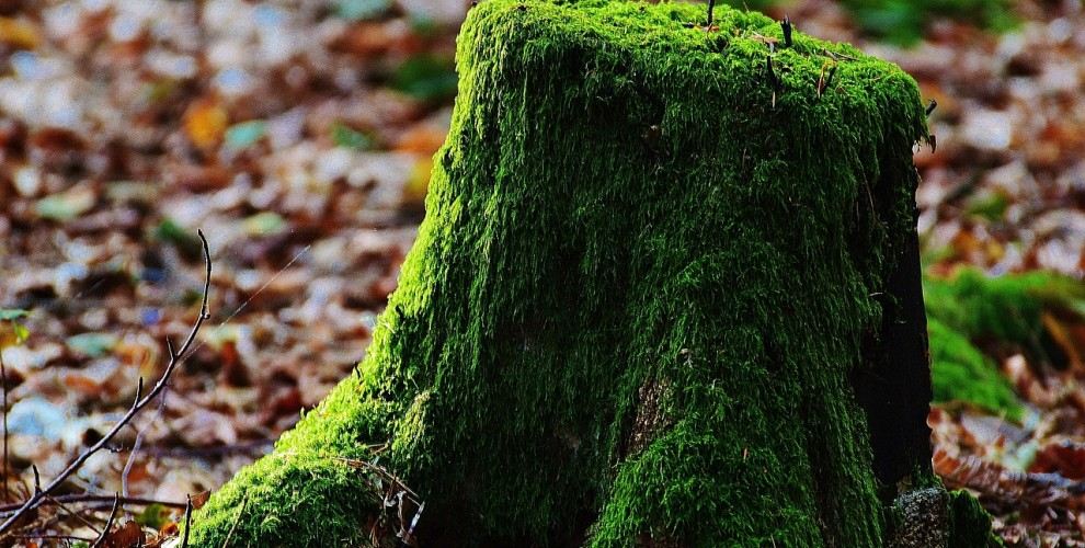 Could moss be the key to inducing calm in your design?
