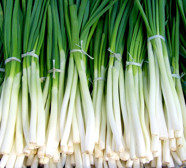 Spring onion - autumn garden