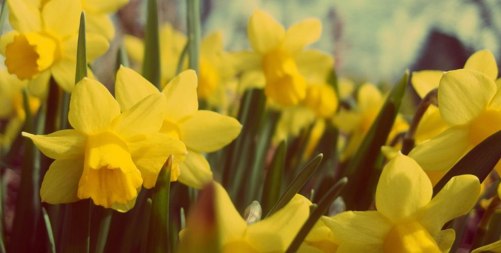 Is spring the best time to buy property?