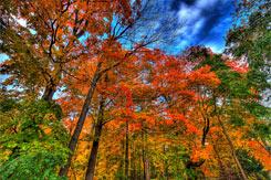 rw-autumn