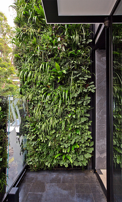 Big ideas for small gardens news ray white blackwood for Jardin vertical artificial