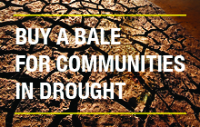 Website story tile - Nationwide drought appeal - Community - Ray White