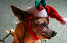 dog-christmas