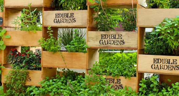 50 best Edible Home Garden Designs Multifunctional Edible