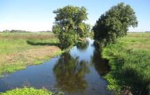 Redevelopment of McCready Creek South Regional Wetland