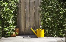 Watering can image - Ray White_Know How - Landscape - Low res.jpg