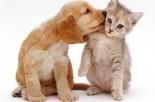 Save-money-pets-credit-Rex-